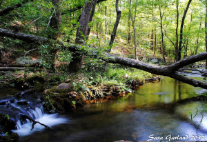 Collins Creek, Heber Springs, Arkansas
